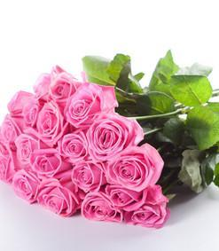 Buy 15 Pink Roses Bouquet